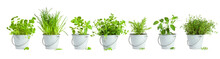 Variety Of Seven Herbs Planted In Tin Buckets Arranged In A Row Isolated On White Background