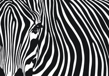 Zebra Stripes Background, Black And White Abstract Pattern Design, Vector Illustration