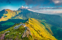 Attractive Summer View Of Fields Of Blooming Rhododendron Flowers. Magnificent Morning Scene Of Carpathian Mountains In June, Ukraine, Europe. Landscape Photography.
