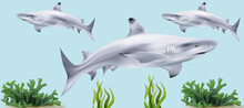 """3D Illustration Of A """"Sharks"""" Into The Sea"""