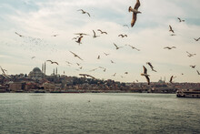 View Of The Bosphorus And The City Of Istanbul. There Are Many Seagull Birds In The Sky Above The Water. Istanbul. Turkey