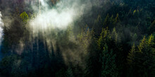 Pine Tree Tops With Fog Seen From A Drone.