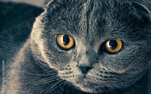 Fotografie, Obraz la mirada de un gato