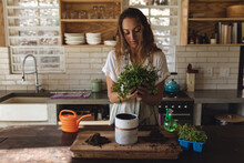 Caucasian Woman Potting Plants Standing In Sunny Cottage Kitchen
