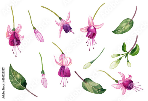 Fotografie, Obraz Watercolor illustration