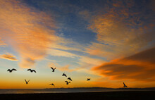 Silhouette Of A Flock Of Birds Flying Over Coastal Landscape At Sunset, New Zealand