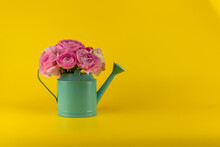 Ranunculus Azur Deep Pink In A Watering Can On A Yellow Background