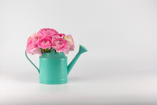 Ranunculus Azur Deep Pink In A Watering Can On A White Background