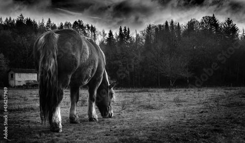 Fotografia, Obraz trait de cheval