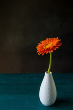 Orange Flower In White Vase