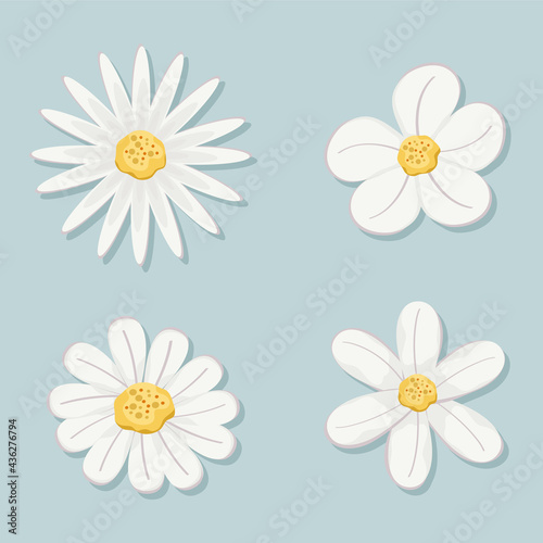 Tableau sur Toile set of flowers with white leaves