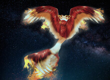 Here Is A Crown Phoenix For You Use It As You Like  Quick Tip- This Is Really Good For Wallpaper