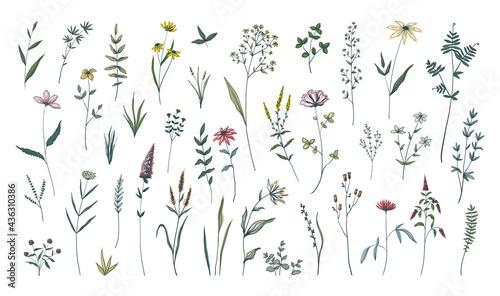 Fotografie, Obraz Summer flowers