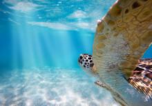 Meeresschildkröte Ganz Nah Beim Tauchen Im Meer Unter Wasser