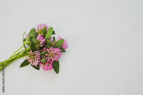 Tablou Canvas Top view of a bouquet of red clovers isolated on a gray background with space fo