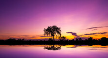 Safari Theme.Amazing Sunset And Sunrise.Panorama Silhouette Tree In Africa With Sunset.Dark Tree On Open Field Dramatic Sunrise.