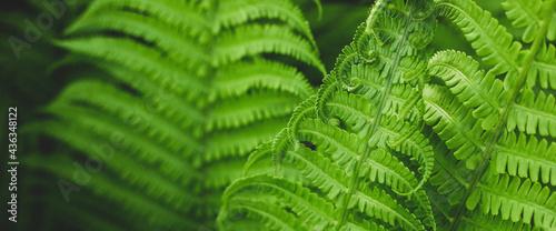 Fotografia Forest fern in sunlight after rain