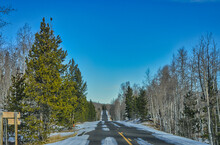 Countryside Endless Road With Pine Trees On Both Sides Under The Blue Sky