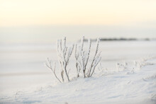 Arctic Landscape In Winter Time. Grass With Ice And Snow In Tundra. Sunset.
