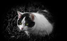 Cute Cat In Grass In The Garden