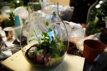 Plants For Terrarium. Terrarium Plants. Florarium. Miniature Botanical Horticulture Grow. Making Terrarium Workshop