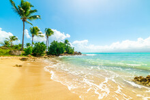 Palm Trees In Beautiful Bas Du Fort Shore In Guadeloupe