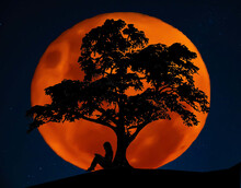 Full Blood Moon With Southern Cross Stars In Background As Silhouette Of A Woman Reading Under The Lebanese Cedar Tree