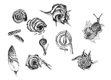 Spiral In Objects.Pen Drawings From Nature.Black And White Graphics.