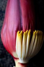 Closeup Of Banana Flower