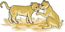 Illustration Of Golden Lion Cubs
