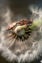 Background With A Bug, Nacka, Sverige, Sweden, Stockholm
