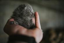 Closeup Shot Of An Adorable Newborn Kitten