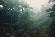 Misty Rainforest Of Costa Rica