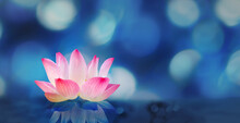 Soft Pink White Lotus On Pond With Soft Blur Bokeh Reflection On Panorama Background, Lily Water Flower On The Water