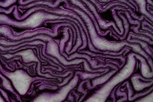 Red Cabbage Slice Close-up Abstract Organic Texture Background