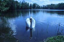 Swan On The Lake, Blue Sky