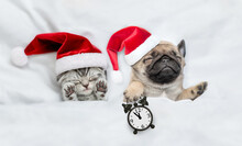Cute Kitten And Tiny Pug Puppy Wearing Santa Hats Sleep Together  Under A White Blanket On A Bed At Home. Pug Puppy Holds Alarm Clock. Top Down View