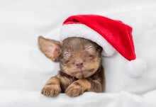 Funny Dachshund Puppy Wearing Red Santa Hat Sleeps Under White Blanket At Home. Top Down View