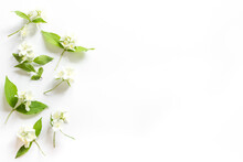White Jasmine Flowers With Green Leaves Flat Lay
