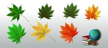 Realistic Vector Autumn Leaves. Autumn Icon Set. Fall Leaves. Nature Symbol Vector Collection Isolated On White Background.