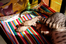 Hind Legs Of A Kitten Among Toys. Part Of The Body Of A Sleeping Kitten