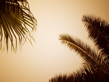 Summer Background. Silhouettes Of Leaves Of Different Palm Trees In The Setting Sun, From Bottom To Top. Copyspace.