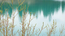 Nature Landscape Summer Spring Blue Clear Lake Forest In The Distance   Young Trees Buds New Fresh Green Leaves
