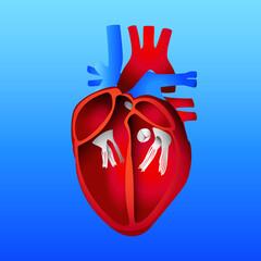 Human Heart, Blue