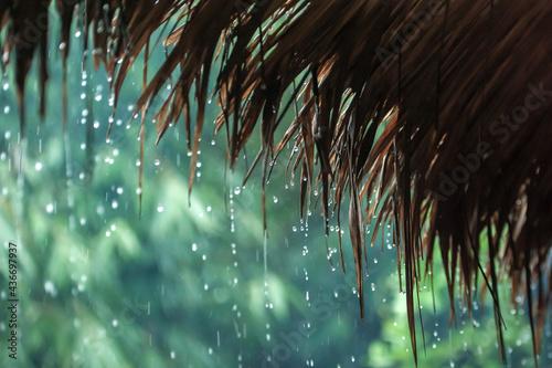 Fotografiet Rain drops falling from cogon grass roof hut.
