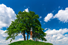 Lonely Tree On Hill Top. Summer Sunny Day. Vibrant Colors And Blue Sky With Clouds