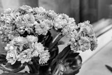 Black And White Photo Of A Blooming Kalanchoe Flowers On A Light Background