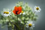 Fototapeta Kwiaty - Polne kwiaty