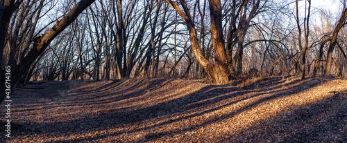 Fotografia Fall Forest at Sunset Panorama
