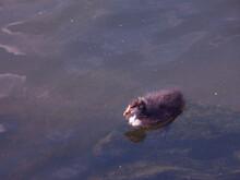 łyska Ptak Woda Młode Natura Zwierze